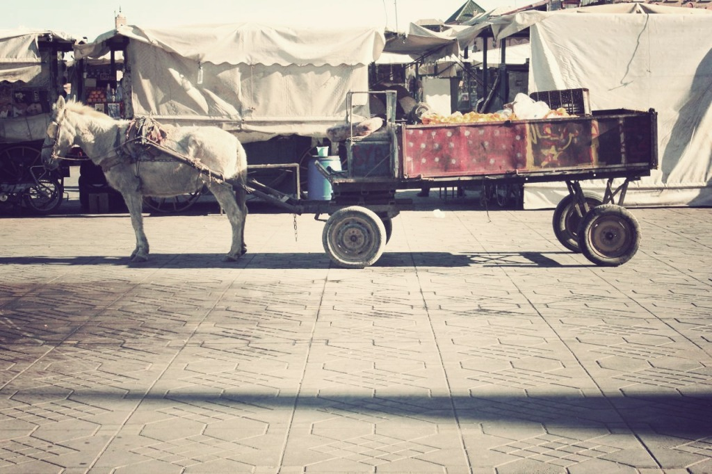 Dusty Sneakers I Ovi I Maroc 6