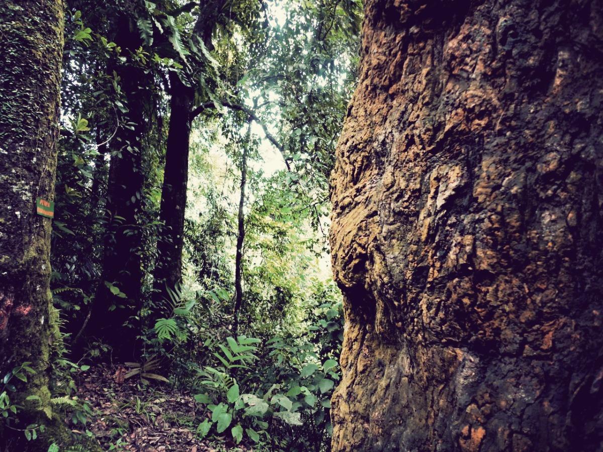 Tentang Pohon-Pohon yang Bijaksana